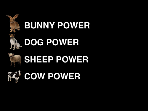 bunny power, dog power, sheep power, cow power